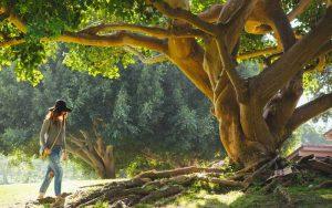 Lâcher-prise : relisons le chêne et le roseau